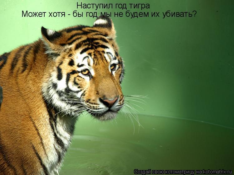 Котоматрица: Наступил год тигра Может хотя - бы год мы не будем их убивать?