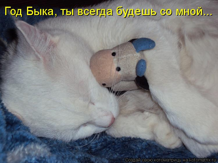 Котоматрица: Год Быка, ты всегда будешь со мной...