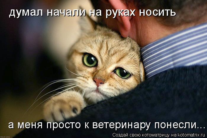 Котоматрица: думал начали на руках носить а меня просто к ветеринару понесли...
