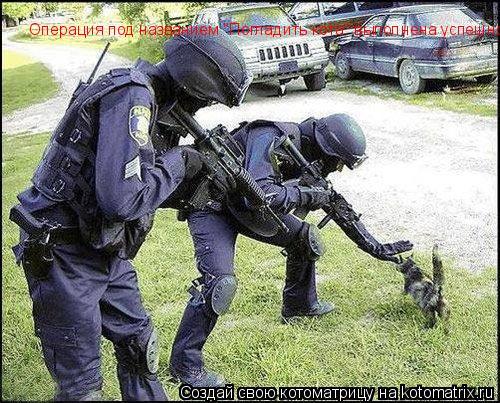 """Котоматрица: Операция под названием """"Погладить кота"""" выполнена успешно."""