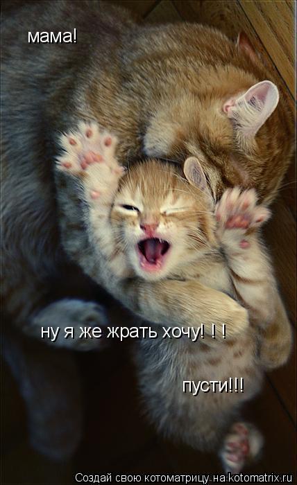 Котоматрица: мама! ну я же жрать хочу! ! ! пусти!!!
