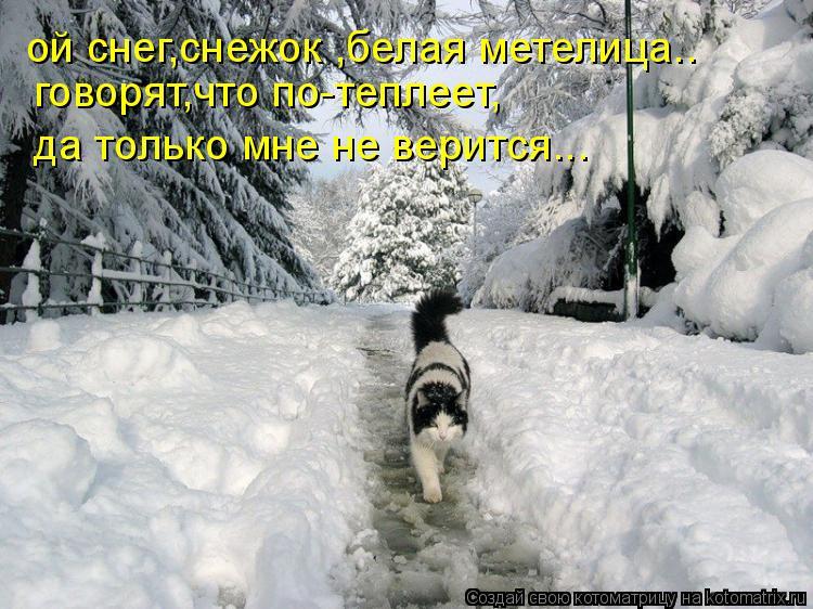 Котоматрица: ой снег,снежок ,белая метелица.. говорят,что по-теплеет, да только мне не верится...