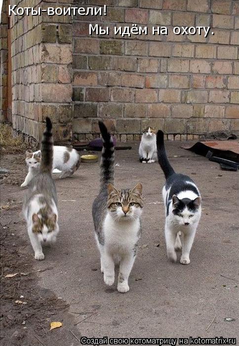 Котоматрица: Коты-воители! Мы идём на охоту.