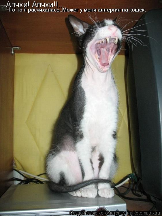 Котоматрица: -Апчхи! Апчхи!!... Что-то я расчихалась..Может у меня аллергия на кошек.