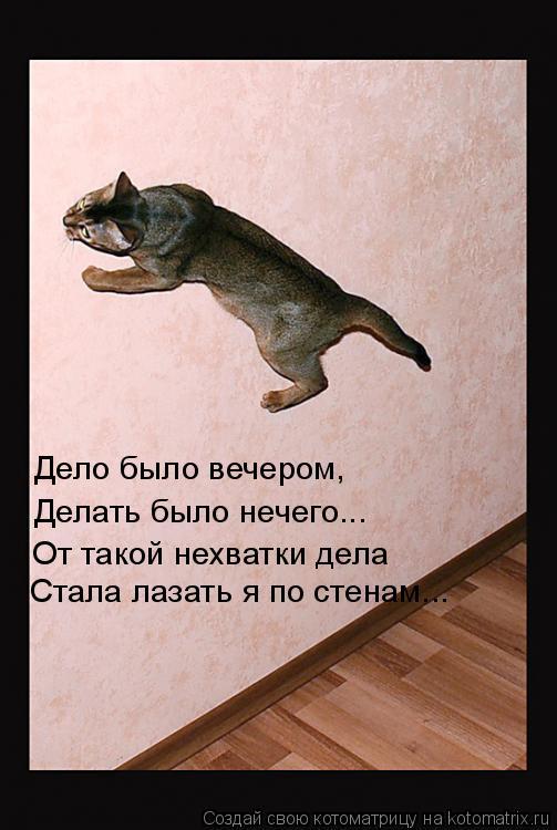 Котоматрица: Дело было вечером, Делать было нечего... От такой нехватки дела Стала лазать я по стенам...