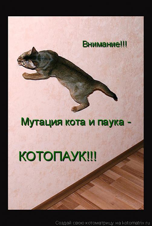 Котоматрица: Внимание!!! Мутация кота и паука - КОТОПАУК!!!