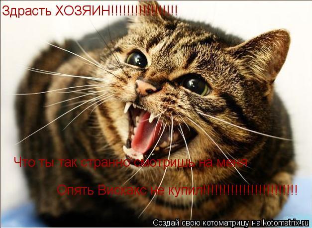 Котоматрица: Здрасть ХОЗЯИН!!!!!!!!!!!!!!!!! Что ты так странно смотришь на меня Опять Вискакс не купил!!!!!!!!!!!!!!!!!!!!!!!!