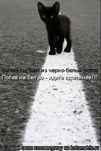 Котоматрица: Жизнь состоит из черно-белых полос... Попав на белую - идите вдоль нее!!!