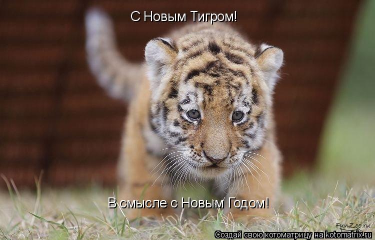 Котоматрица: В смысле с Новым Годом! С Новым Тигром!