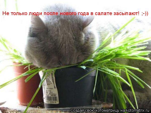 Котоматрица: Не только люди после нового года в салате засыпают! ;-))