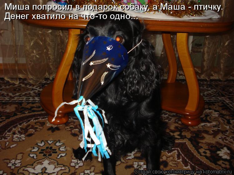 Котоматрица: Миша попросил в подарок собаку, а Маша - птичку. Денег хватило на что-то одно...