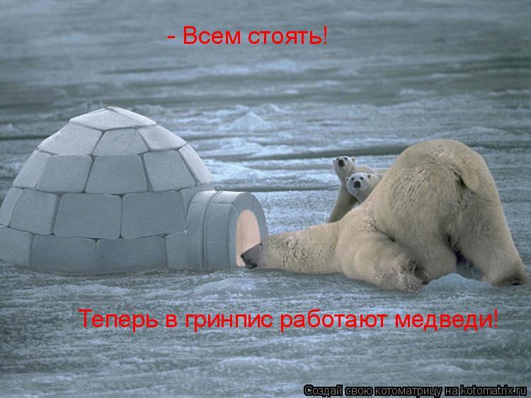 Котоматрица: - Всем стоять! Теперь в гринпис работают медведи!
