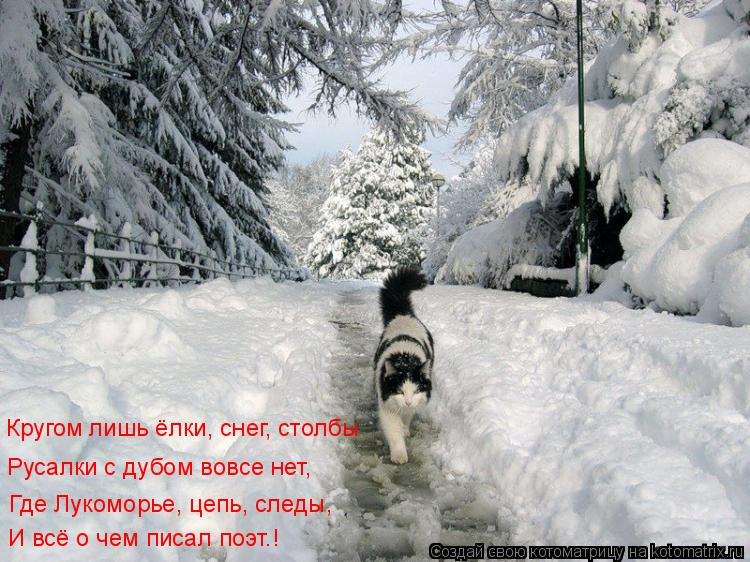 Котоматрица: Где Лукоморье, цепь, следы, Русалки с дубом вовсе нет, Кругом лишь ёлки, снег, столбы И всё о чем писал поэт…!