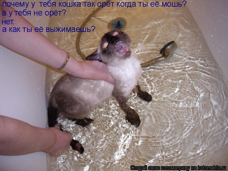 Котоматрица: почему у  тебя кошка так орёт когда ты её мошь? а у тебя не орёт? нет. а как ты её выжимаешь?