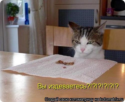 Котоматрица: Вы издеваетесь?!?!?!?!?!?