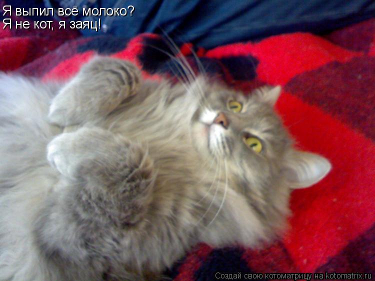 Котоматрица: Я выпил всё молоко? Я не кот, я заяц!