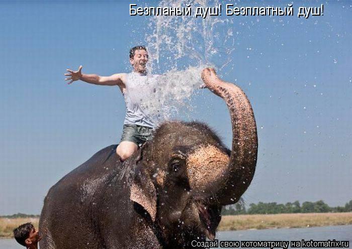 Котоматрица: Безпланый душ! Безплатный душ!