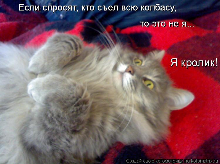 Котоматрица: Если спросят, кто съел всю колбасу, то это не я... Я кролик!