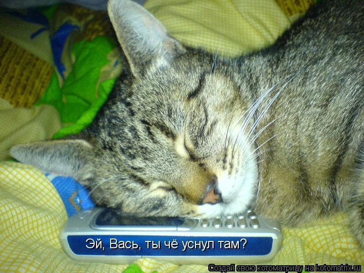 Котоматрица: Эй, Вась, ты чё уснул там?