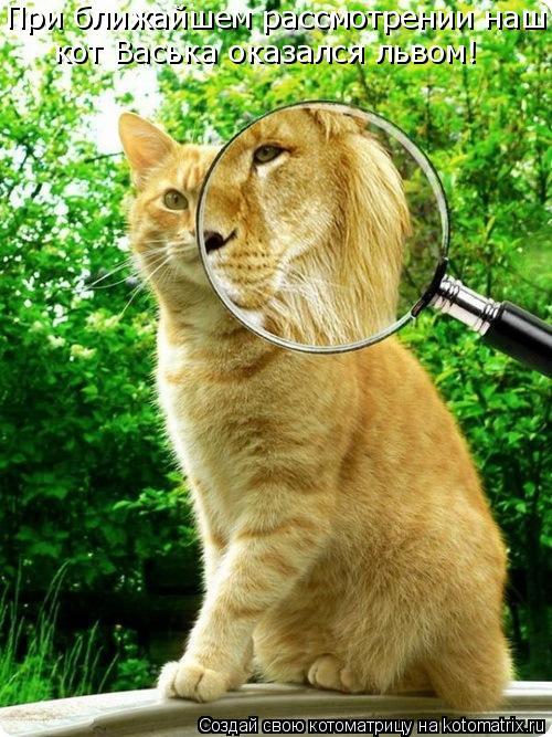 Котоматрица: При ближайшем рассмотрении наш кот Васька оказался львом!
