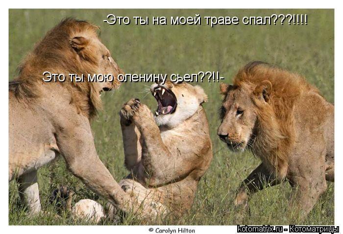 Котоматрица: -Это ты на моей траве спал???!!!! Это ты мою оленину сьел??!!-