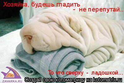 Котоматрица: Хозяйка, будешь гладить -  не перепутай... То что сверху  -  ладошкой...