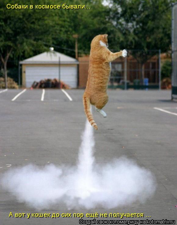 Котоматрица: Собаки в космосе бывали... А вот у кошек до сих пор ещё не получается ...
