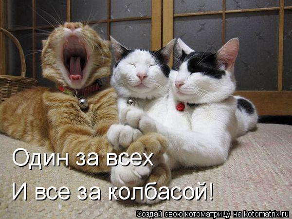 Котоматрица: Один за всех И все за колбасой!