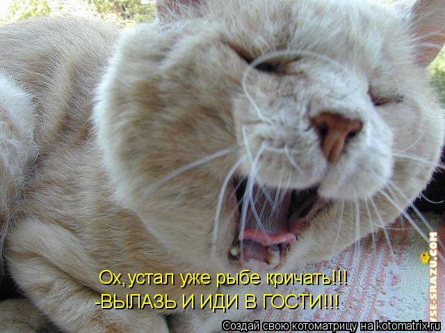 Котоматрица: Ох,устал уже рыбе кричать!!! Ох,устал уже рыбе кричать!!! -ВЫЛАЗЬ И ИДИ В ГОСТИ!!! -ВЫЛАЗЬ И ИДИ В ГОСТИ!!!