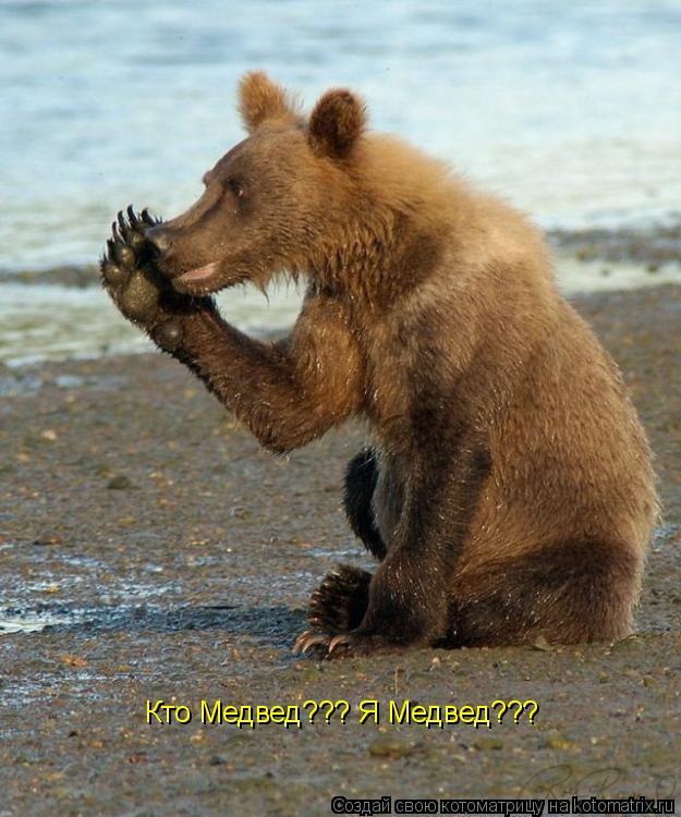 Котоматрица: Кто Медвед??? Я Медвед???