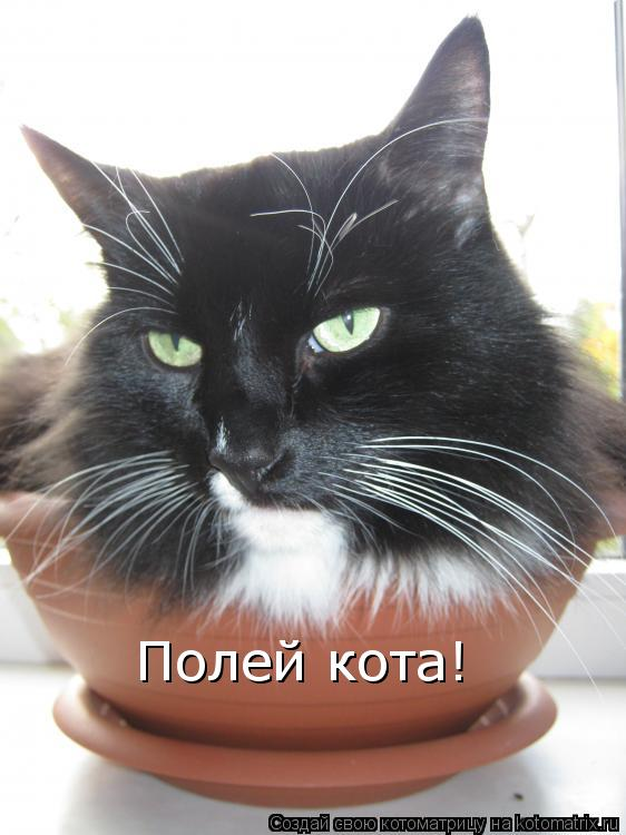 Котоматрица: Полей кота!