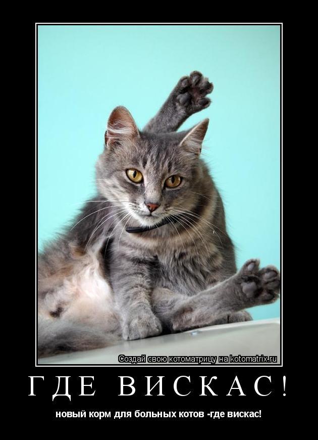 Котоматрица: где вискас! новый корм для больных котов -где вискас!