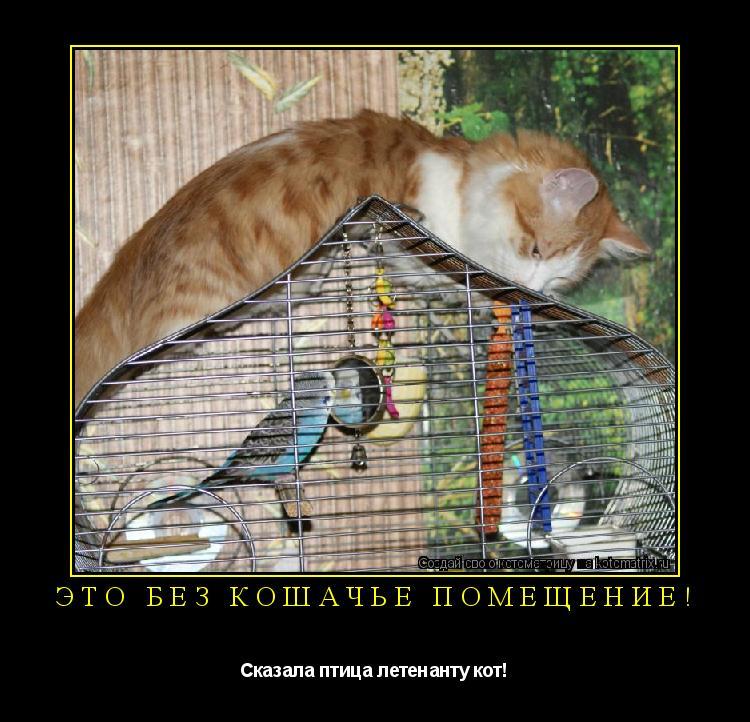 Котоматрица: Это без кошачье помещение! Сказала птица летенанту кот!