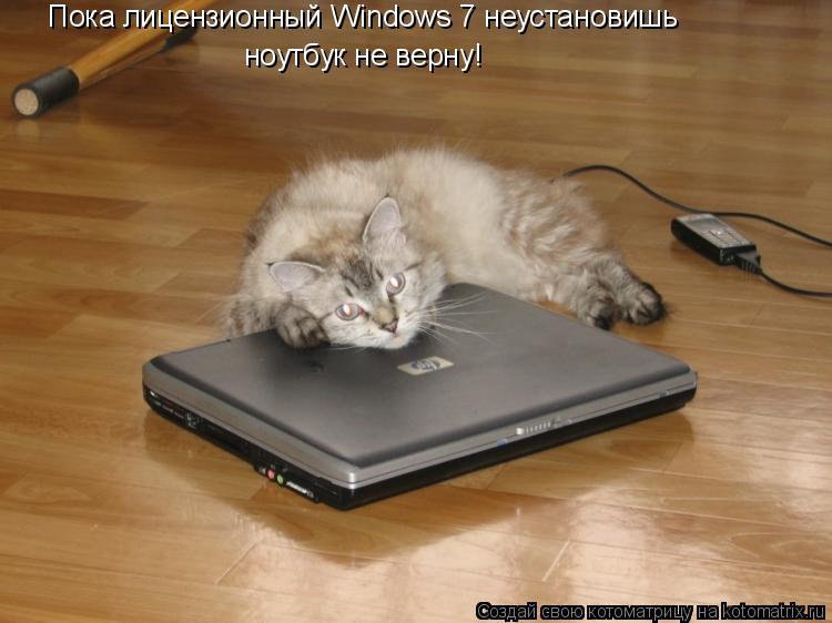 Котоматрица: Пока лицензионный Windows 7 неустановишь ноутбук не верну!