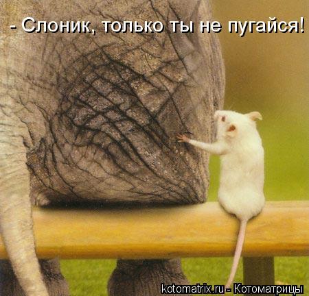 Котоматрица: - Слоник, только ты не пугайся!