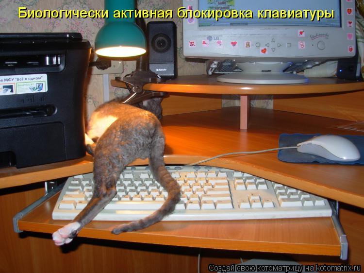 Котоматрица: Биологически активная блокировка клавиатуры