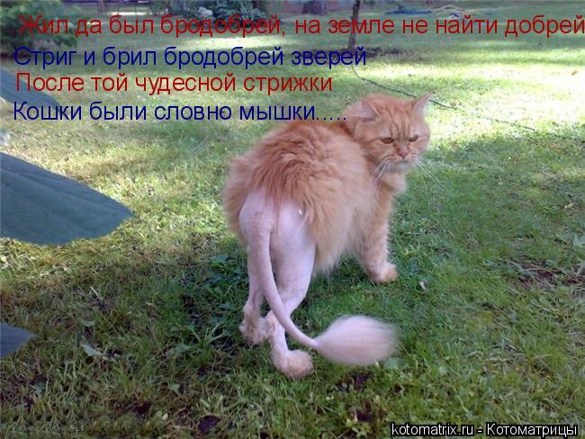 Котоматрица: Жил да был бродобрей, на земле не найти добрей Стриг и брил бродобрей зверей После той чудесной стрижки Кошки были словно мышки.....