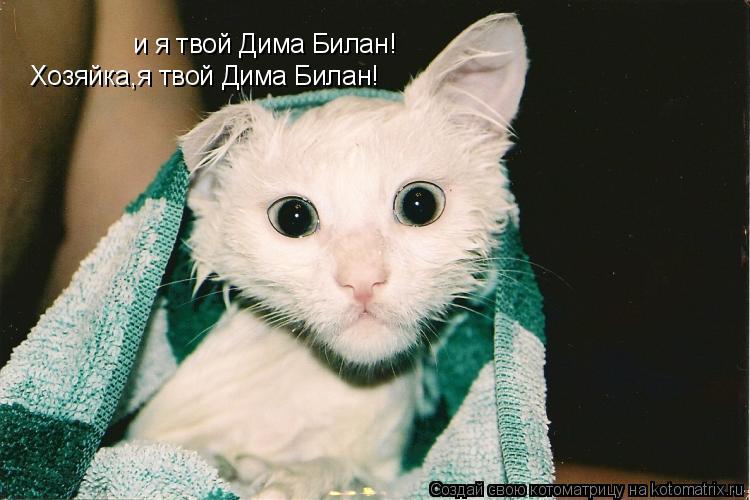 Котоматрица: и я твой Дима Билан! Хозяйка,я твой Дима Билан!