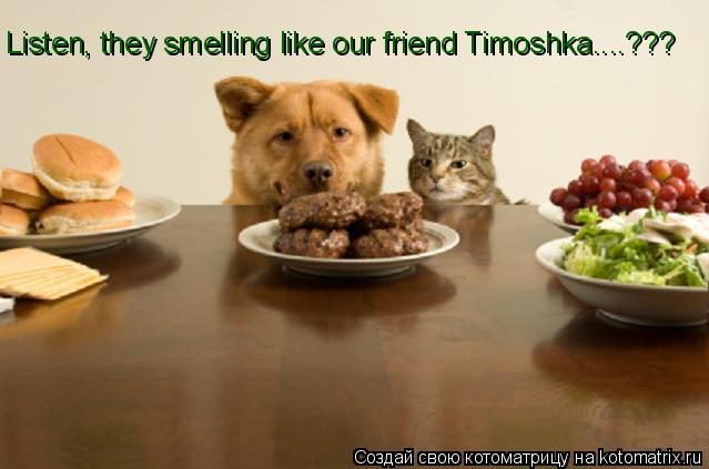 Котоматрица: Listen, they smelling like our friend Timoshka....???