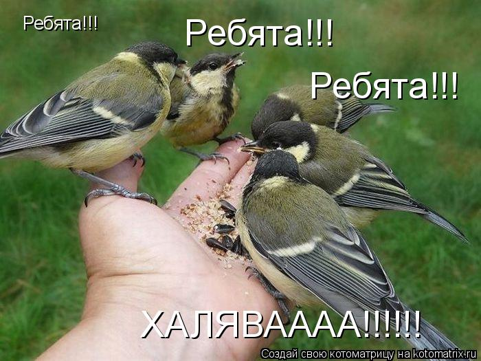 Котоматрица: Ребята!!! Ребята!!! Ребята!!! ХАЛЯВАААА!!!!!!