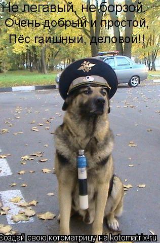 Котоматрица: Не легавый, не борзой,   Очень добрый и простой,  Пёс гаишный, деловой!!