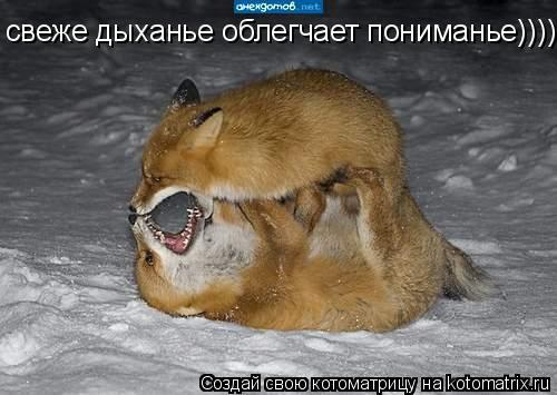 Котоматрица: свеже дыханье облегчает пониманье)))))