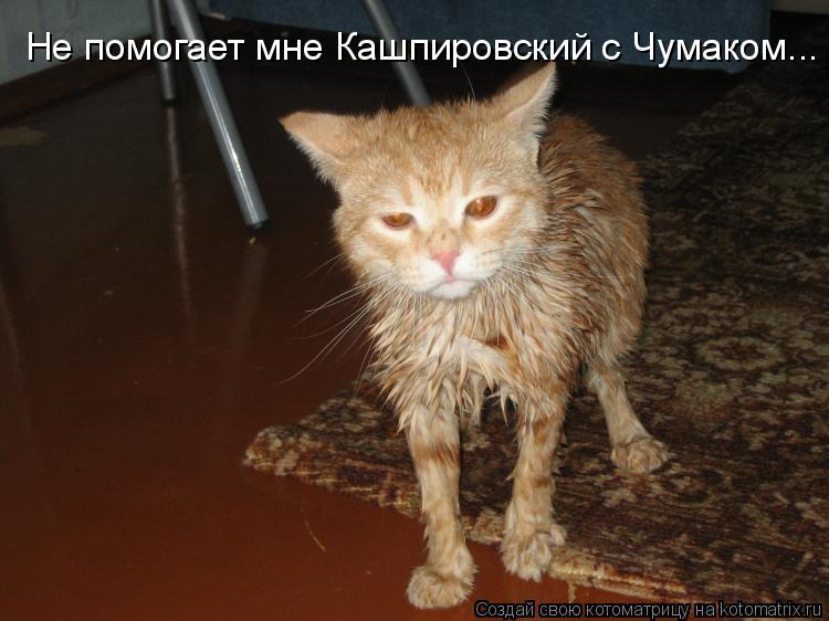 Котоматрица: Не помогает мне Кашпировский с Чумаком...
