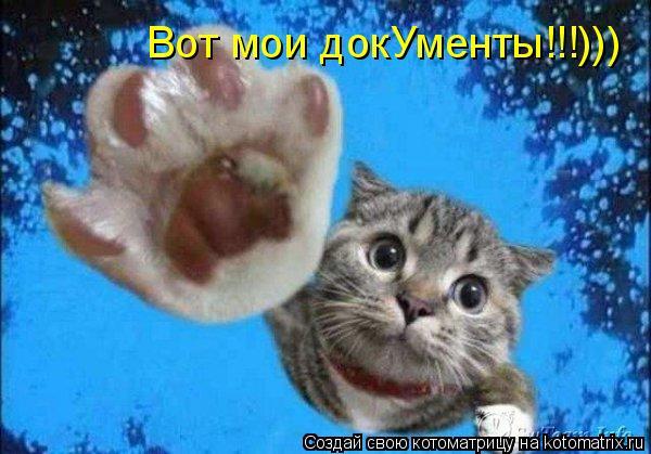 Котоматрица: Вот мои докУменты!!!))) Вот мои докУменты!!!)))