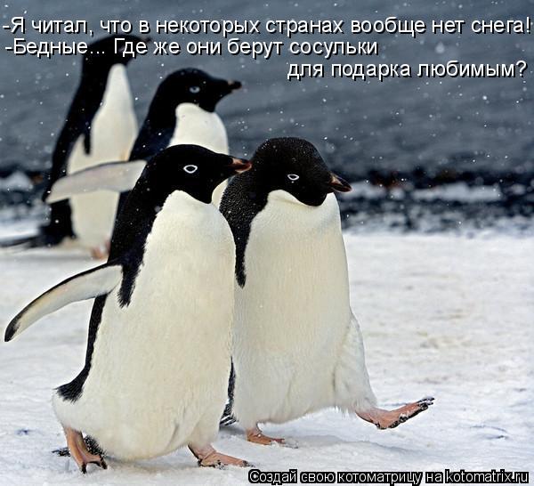 Котоматрица: -Я читал, что в некоторых странах вообще нет снега! -Бедные... Где же они берут сосульки  для подарка любимым?