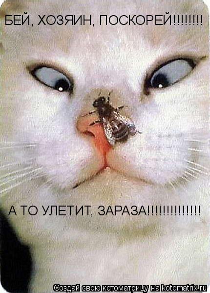 Котоматрица: БЕЙ, ХОЗЯИН, ПОСКОРЕЙ!!!!!!!! А ТО УЛЕТИТ, ЗАРАЗА!!!!!!!!!!!!!!