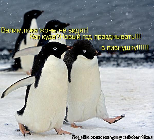 Котоматрица: Валим,пока жоны не видят! Как куда?Новый год празднывать!!! в пивнушку!!!!!!