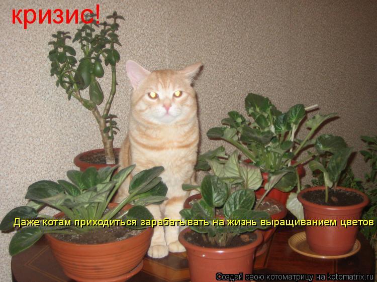 Котоматрица: кризис кризис! Даже котам приходиться зарабатывать на жизнь выращиванием цветов