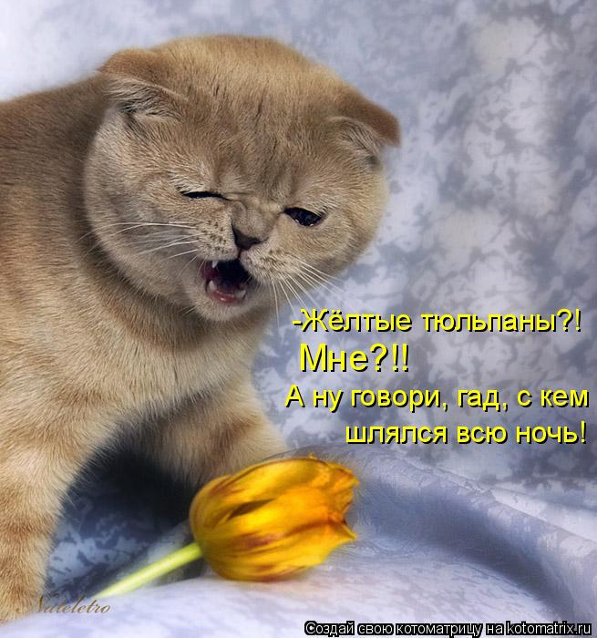 Котоматрица: -Жёлтые тюльпаны?! Мне?!! А ну говори, гад, с кем  шлялся всю ночь!