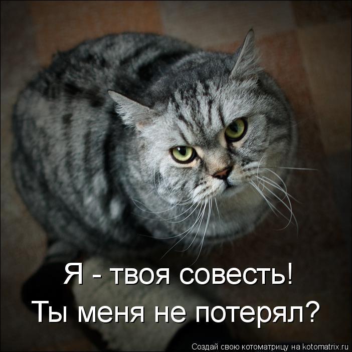 Котоматрица: Я - твоя совесть! Ты меня не потерял?